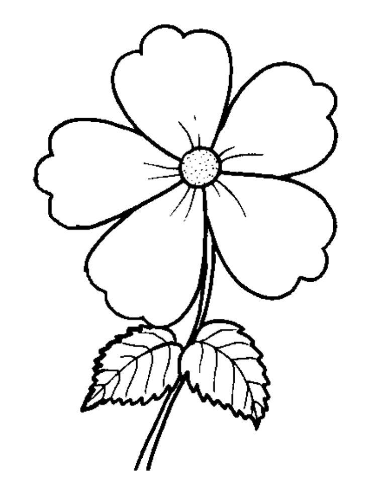 8 Bunga Anggrek Gambar Kolase Bunga Dari Biji Bijian Gambar Bunga Mawar Putih Bunga