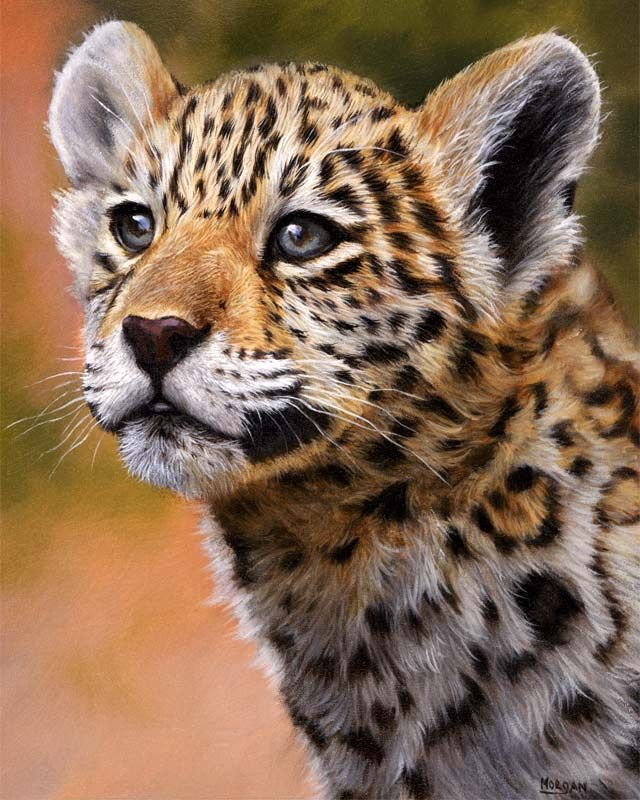 fbb77309 Jason Morgan - jaguar cub painting | Jason Morgan UK Artist | Big ...
