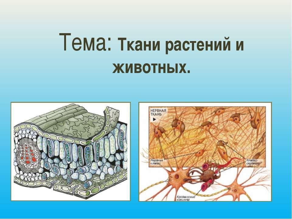 картинку ткани растений и животных рисунок если сами
