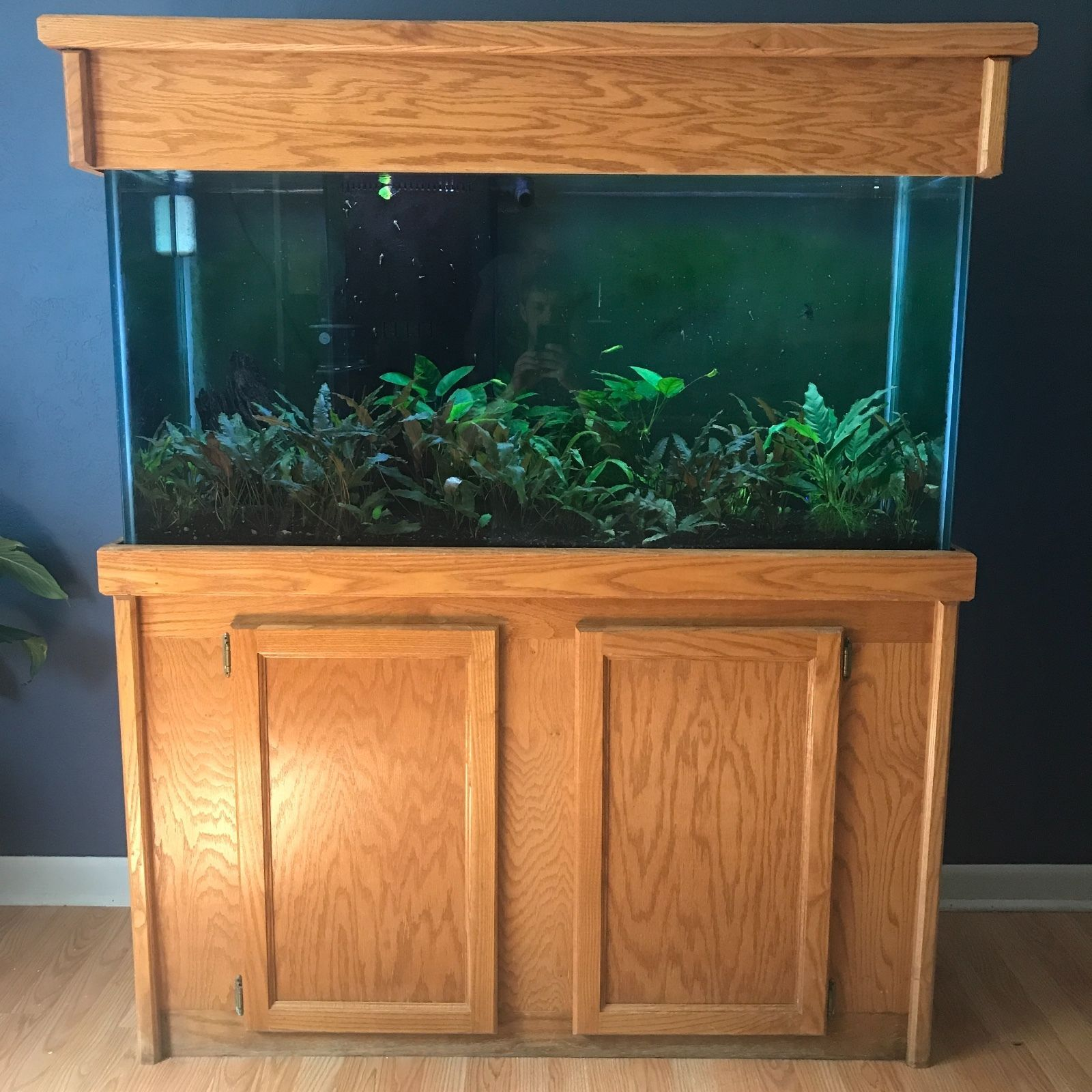 Aquarium Tank Setup Home idea Pinterest