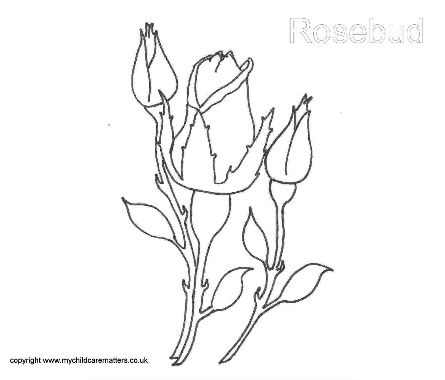 Coloring pages of flower buds - Rose Bud