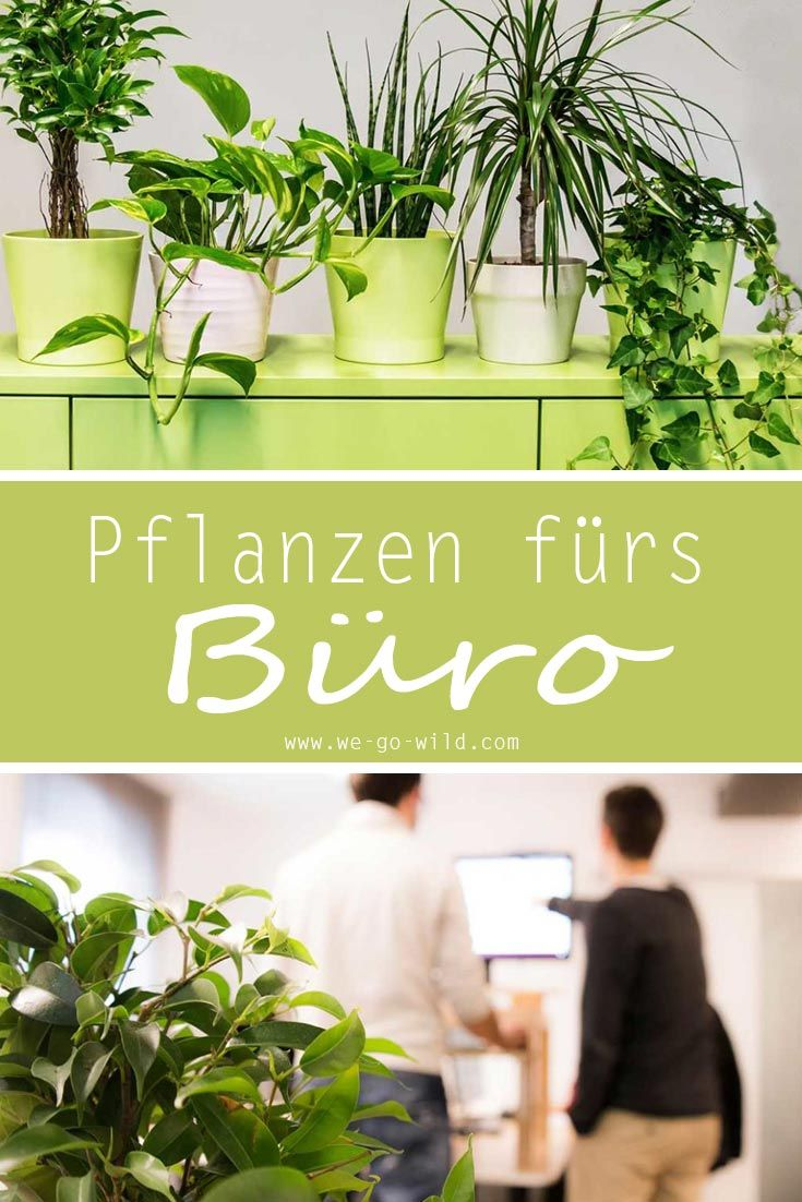 Luftreinigende Pflanzen fürs Büro: Die Top 9 für besseres Raumklima ...