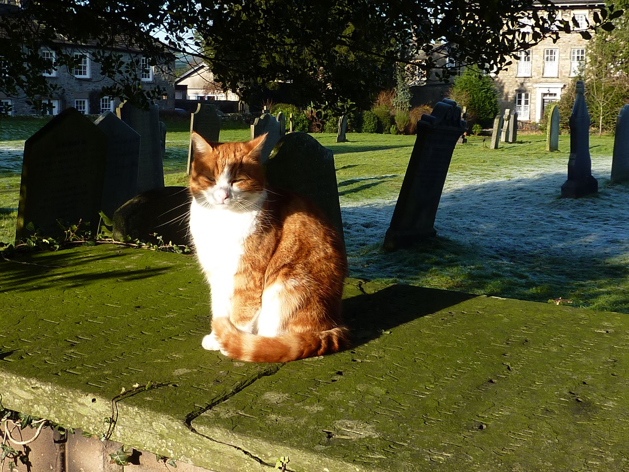 Resident of St.Mary's churchyard