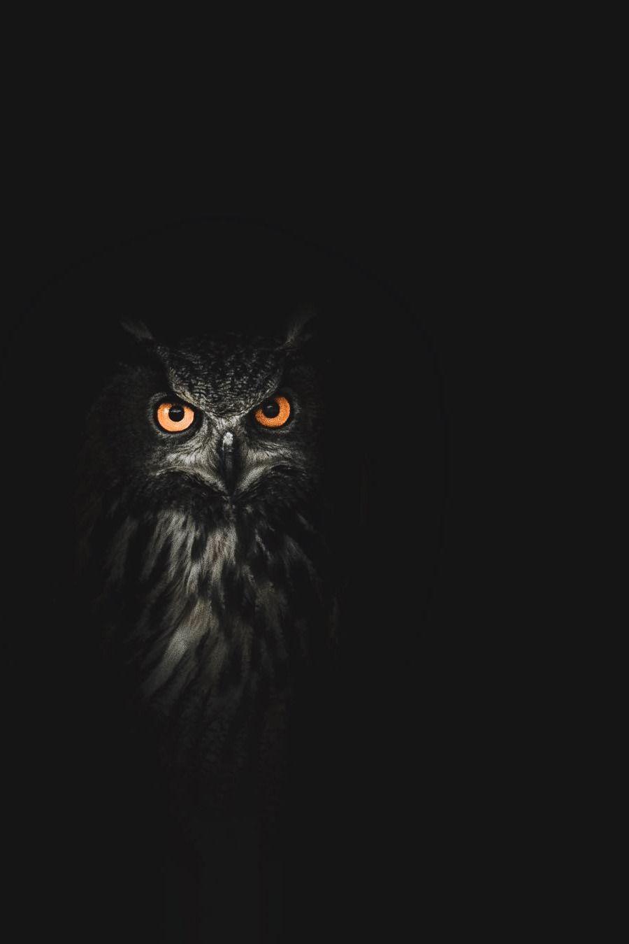Lsleofskye The Eyes Tell More Than Words Could Ever Say Digital Editz Owl Wallpaper Owl Artwork Owl Pet