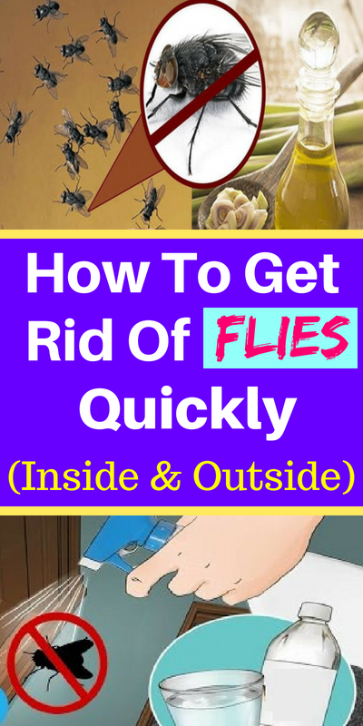 How To Get Rid Of Flies Quickly Inside And Outside Get Rid Of Flies Fly Repellant Home Remedies For Flies