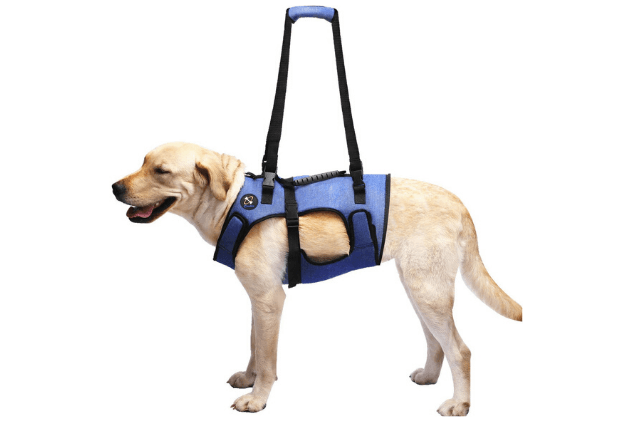 Best Dog Lift Harnesses PetGuide in 2020 Dog pet beds