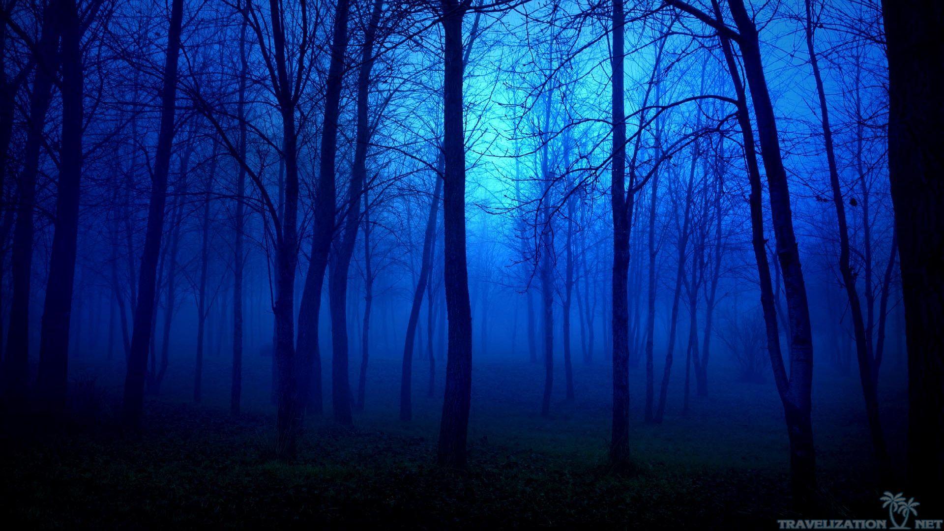 Dark Forest Wallpaper 24 Free Hd