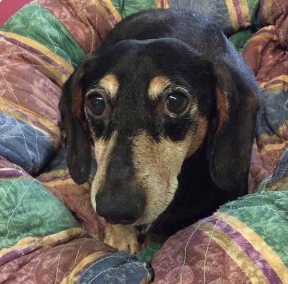 Adopt Sebastian A Lovely 8 Years Dog Available For Adoption At