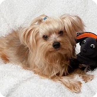 Pictures Of Dog Rescue In Seminole Fl
