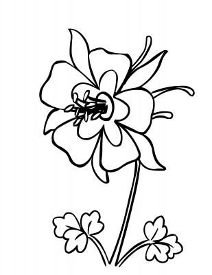 Columbine Flower Coloring Page