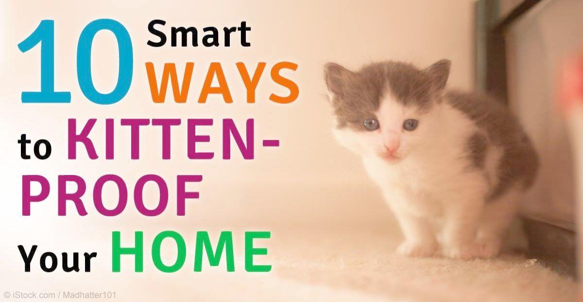 Kittens Game Achievements Kittens Toys Kitten proofing