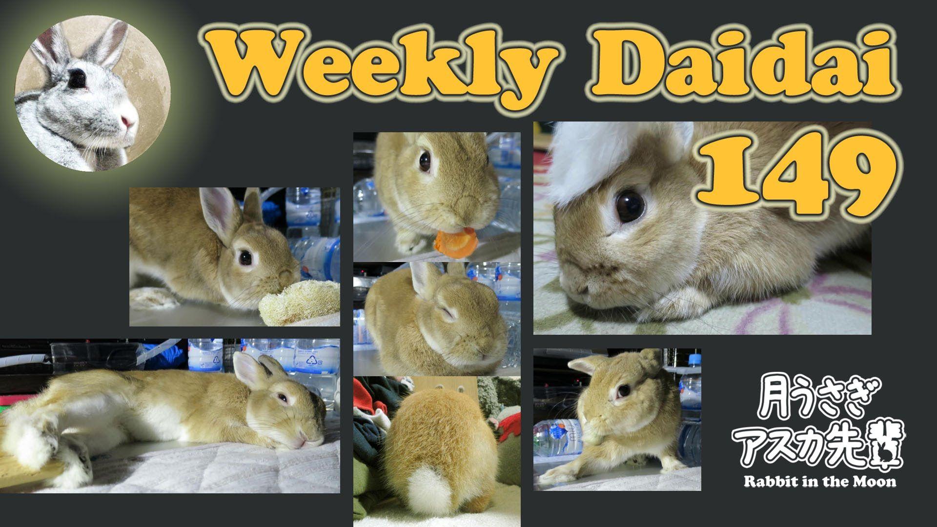 Weekly Daidai 149