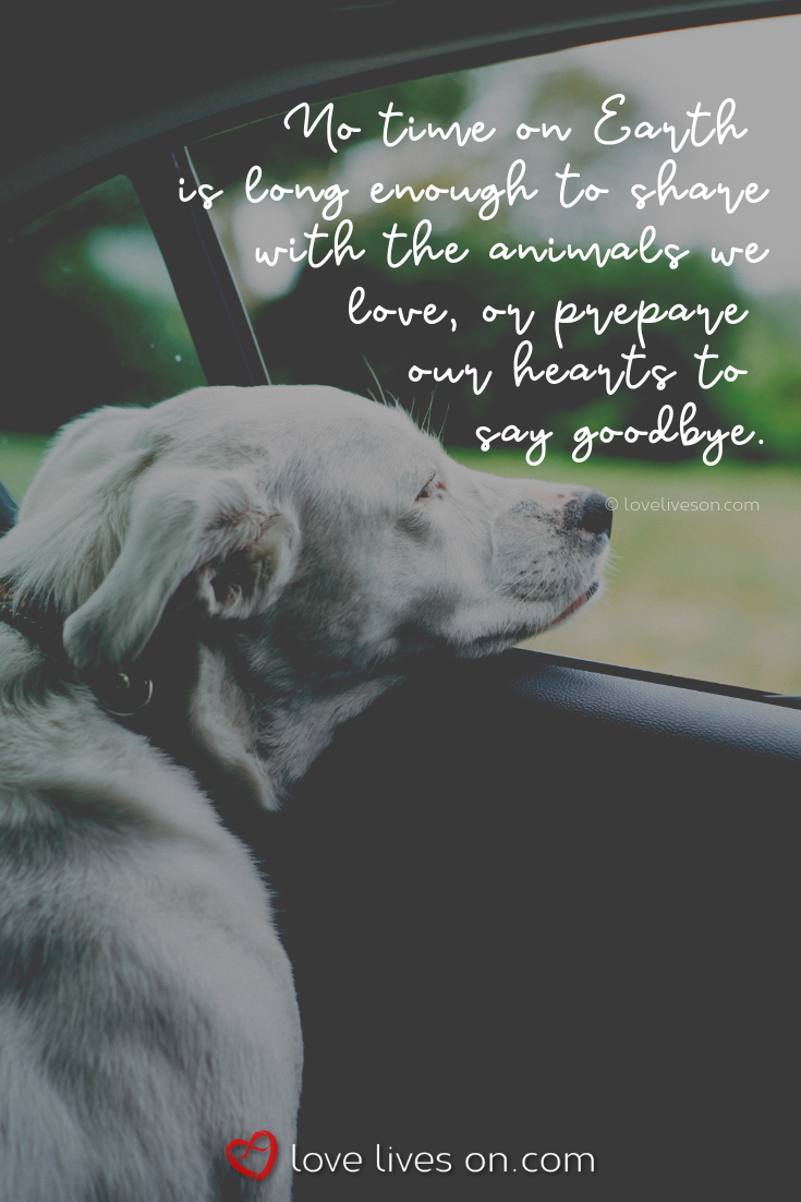 50+ Beautiful Loss of Pet Quotes - Animal wild,Animal cutest,Animal funny and Animal supplies blog