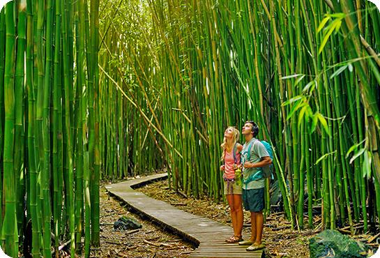 Bamb Gigante Onlymoso.Turismo Verde La Foresta Di Bambu Gigante Onlymoso E Uno
