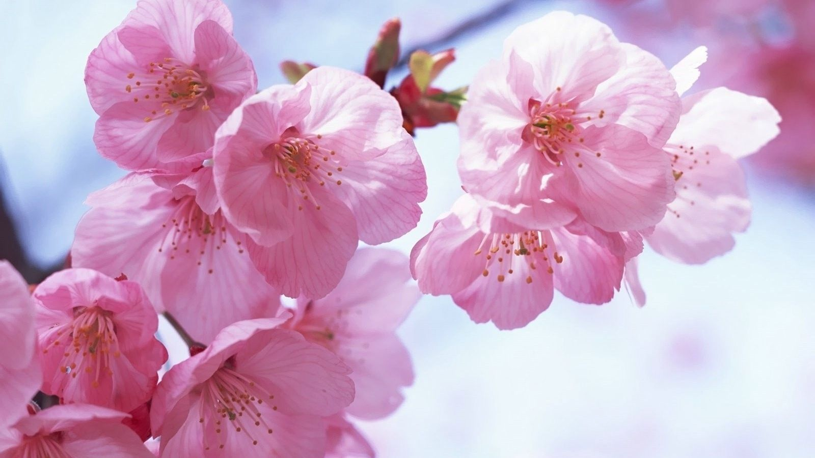 Spring flowers images of flowers hd flowers wallpapers beautiful flowers izmirmasajfo Choice Image