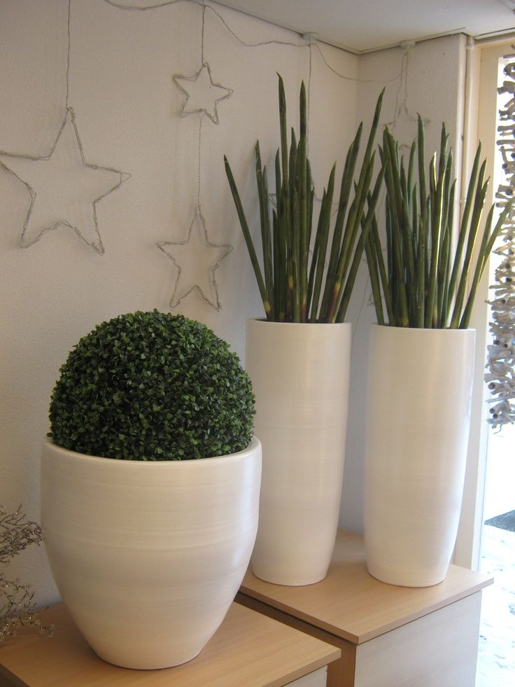 Image result for woonkamer hoge planten | Garden ideas | Pinterest ...