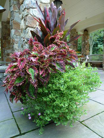 como combinar plantas y flores en macetas | demariposas