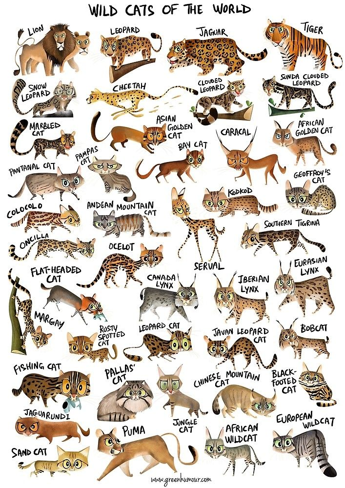 View Wild Cats of the World Poster in 2020 Wild cats