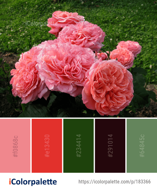 Color Palette Ideas From Rose Flower Garden Roses Image Color Palette Flowers Colorful Flowers