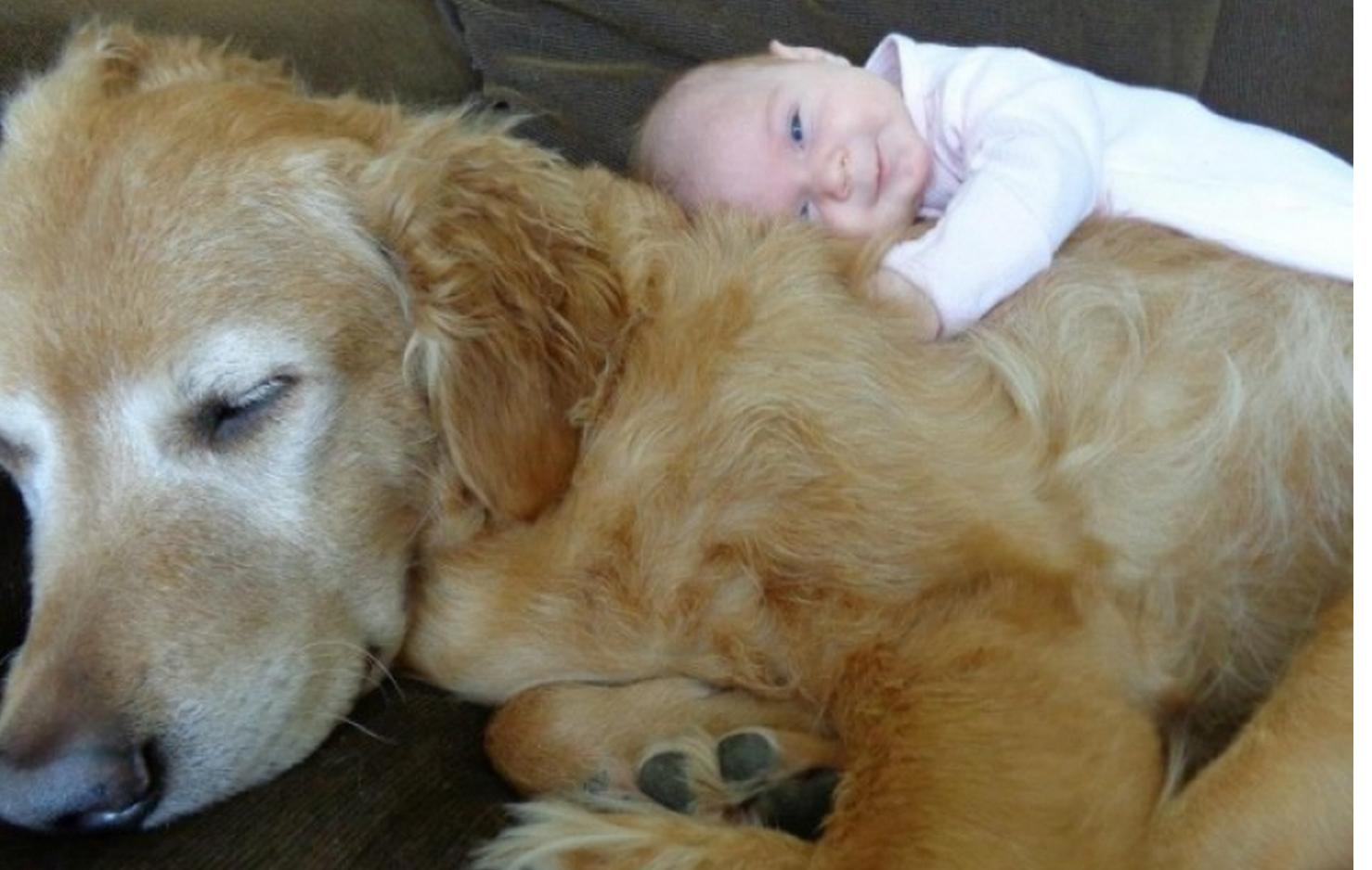 Les chiens de grande taille sont souvent choisis pour leur aspect dissuasif et leur capacité à sécuriser la maison et la famille. Mais ce sont aussi des animaux d'une très grande tendresse, notamment vis-à-vis des enfants.