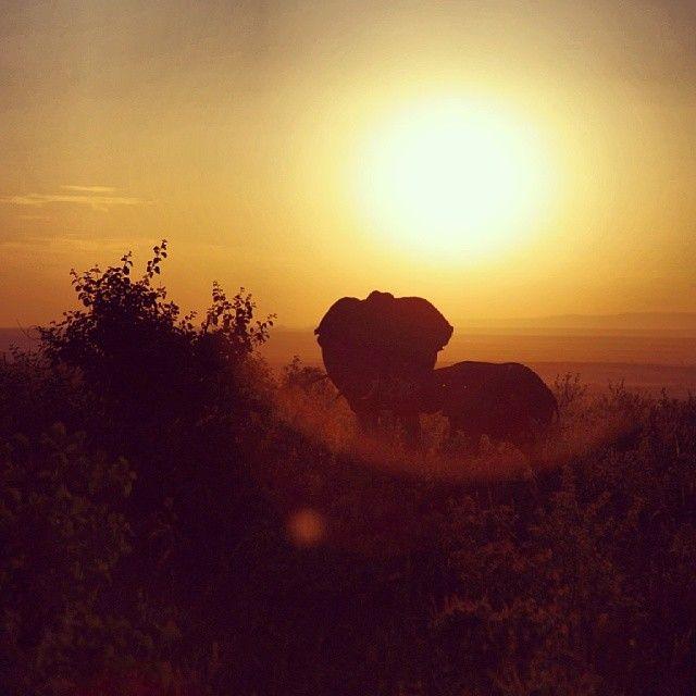 Masai Mara Wildlife Reserve in Masai Mara, Western Kenya