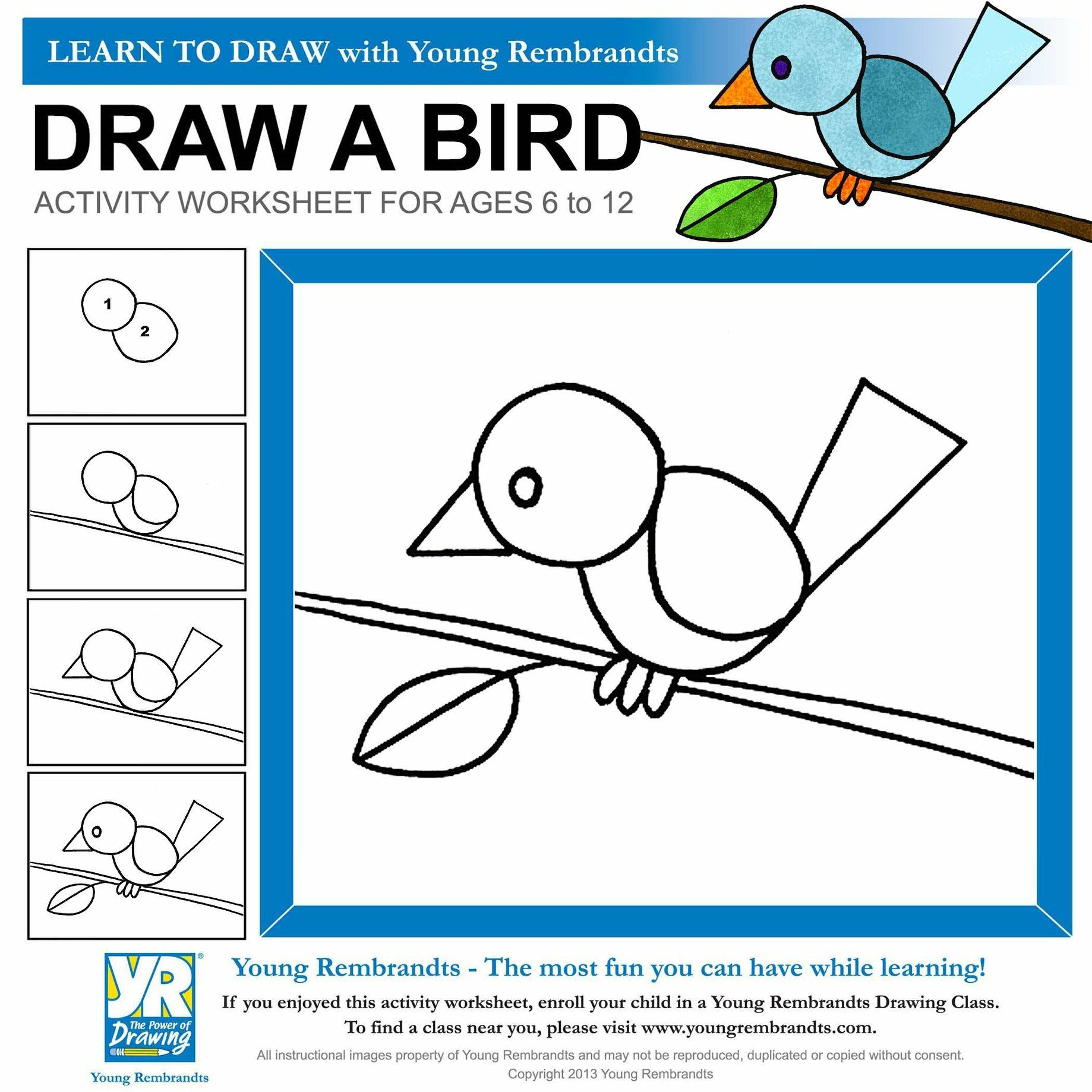 Young Rembrandts | Bird drawings, Drawing class, Rembrandt drawings