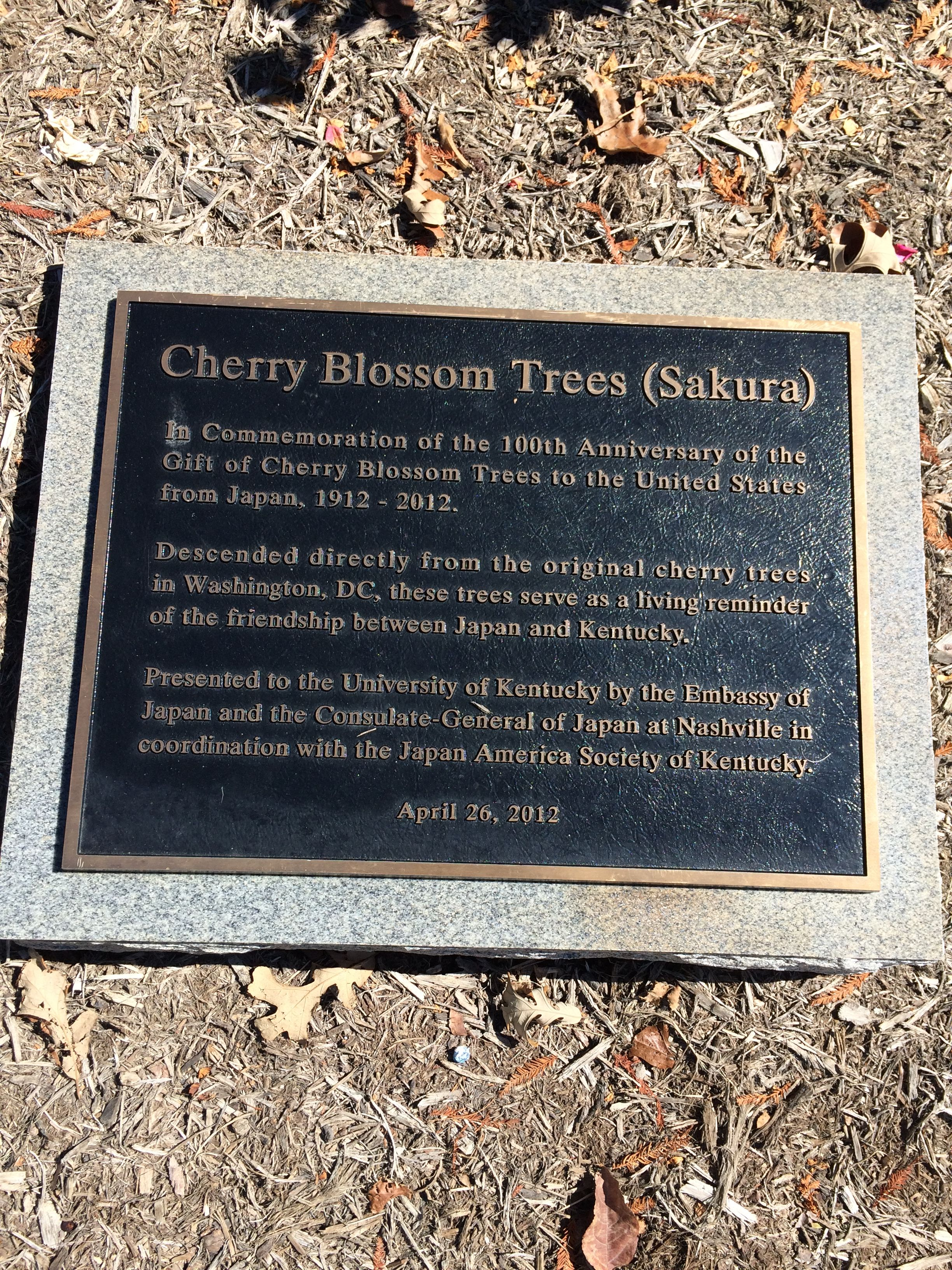 A Living Reminder Of The Friendship Between Japan And Kentucky Cherry Blossom Tree Commemoration Cherry Blossom