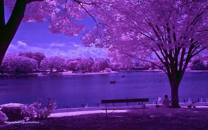 Purple Nature Wallpaper Blue Wallpapers Abstract Wallpaper