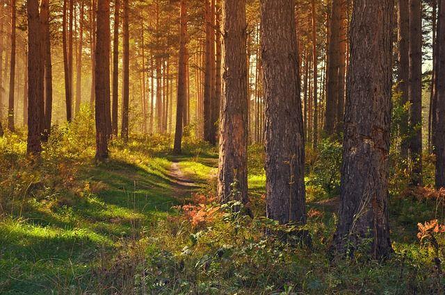 Free Image On Pixabay Forest Nature Landscape Trees Landscape Trees Forest Adventure Tree Forest