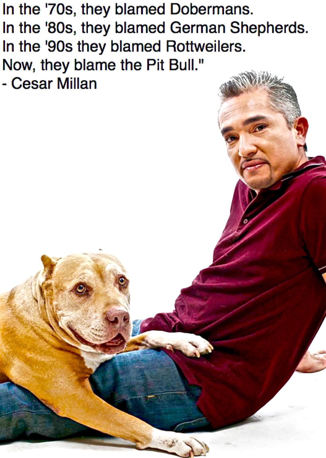 In The 70 S They Blamed The Dobermans Cesar Millan