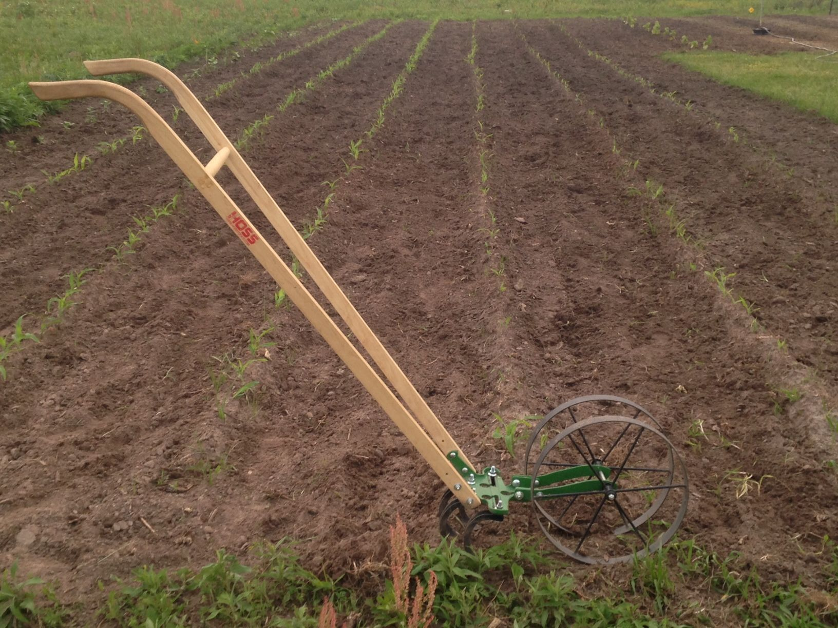 The Hoss Wheel Hoe works great for keeping nut grass under control ...