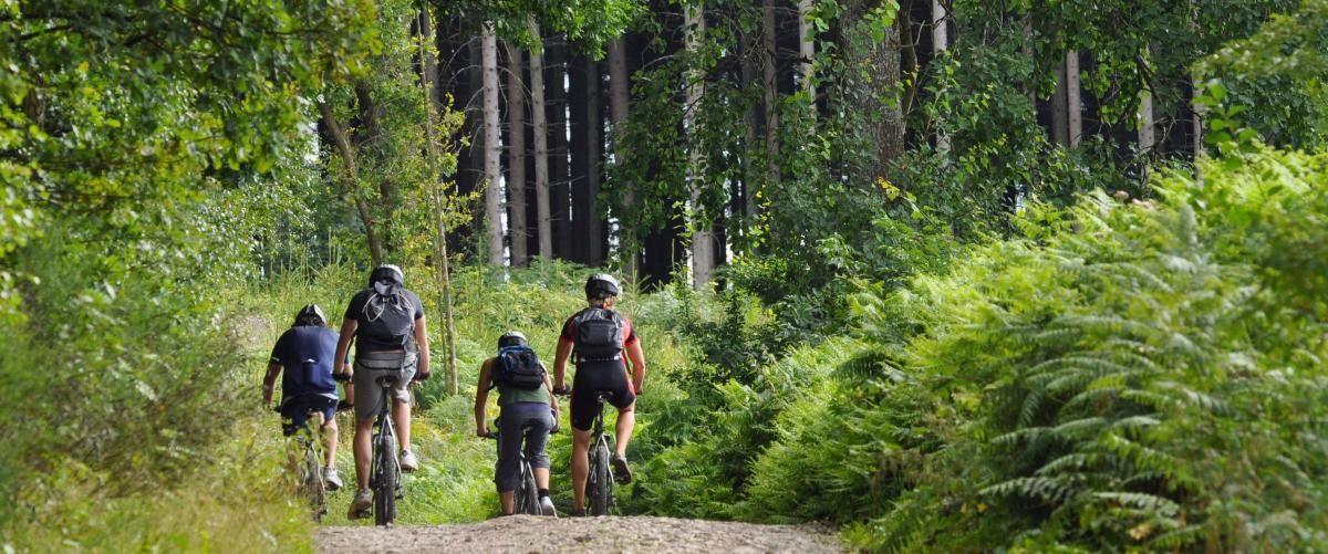Biking prince william forest park forest park bike
