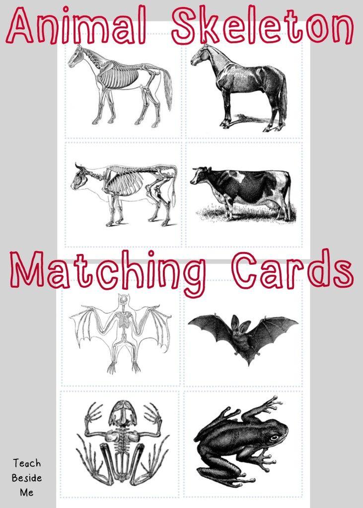 Animal Skeleton Matching Cards | FREE Printables & Resources