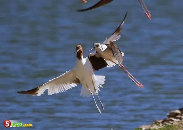 صور رائعة لطيور محلقة   Pet birds, Animals, Australian birds