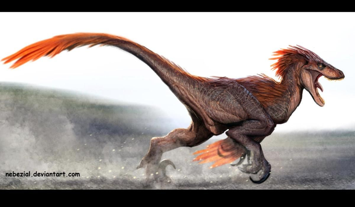 Velociraptor ( )  Late Cretaceous (75–71Ma)  Theropod  Discovered by  Osborn c2b07ae3df