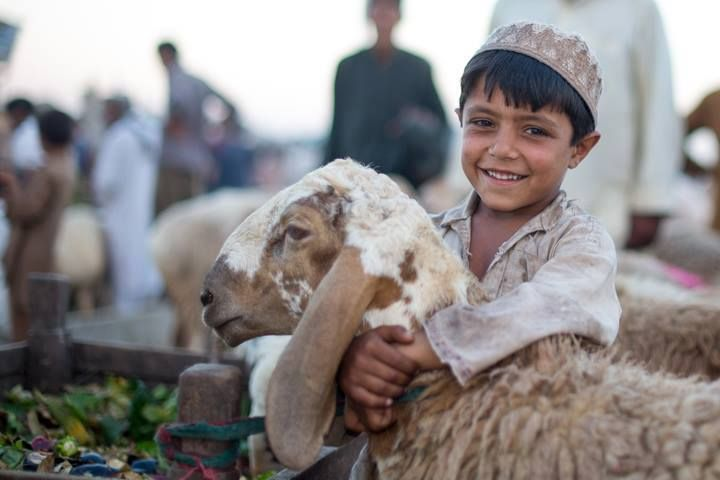 The Eyes of Children around the World Bakra Mandi, Islamabad © Abdulqadir Memon  https://www.facebook.com/abdulqadir.memon.5