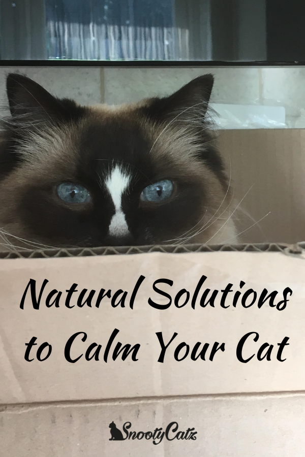Natural Solutions to Calm Your Cat - Snooty Catz   Cats ...
