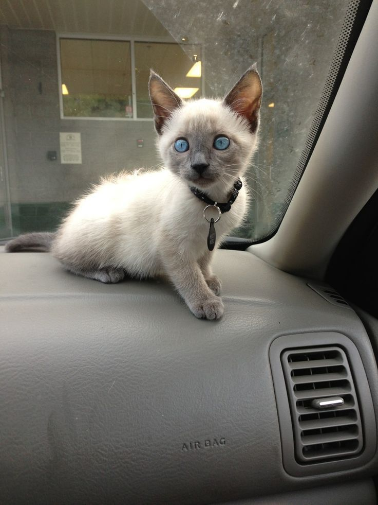 Kittens For Sale In Vancouver