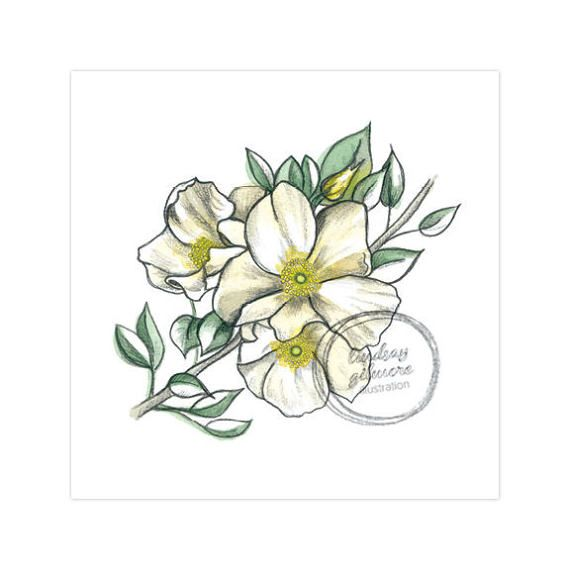 8ba3ad8cb The state Flower of Georgia ~ The Cherokee Rose...They grew along the Trail  of Tears...marking the burials of the dead.
