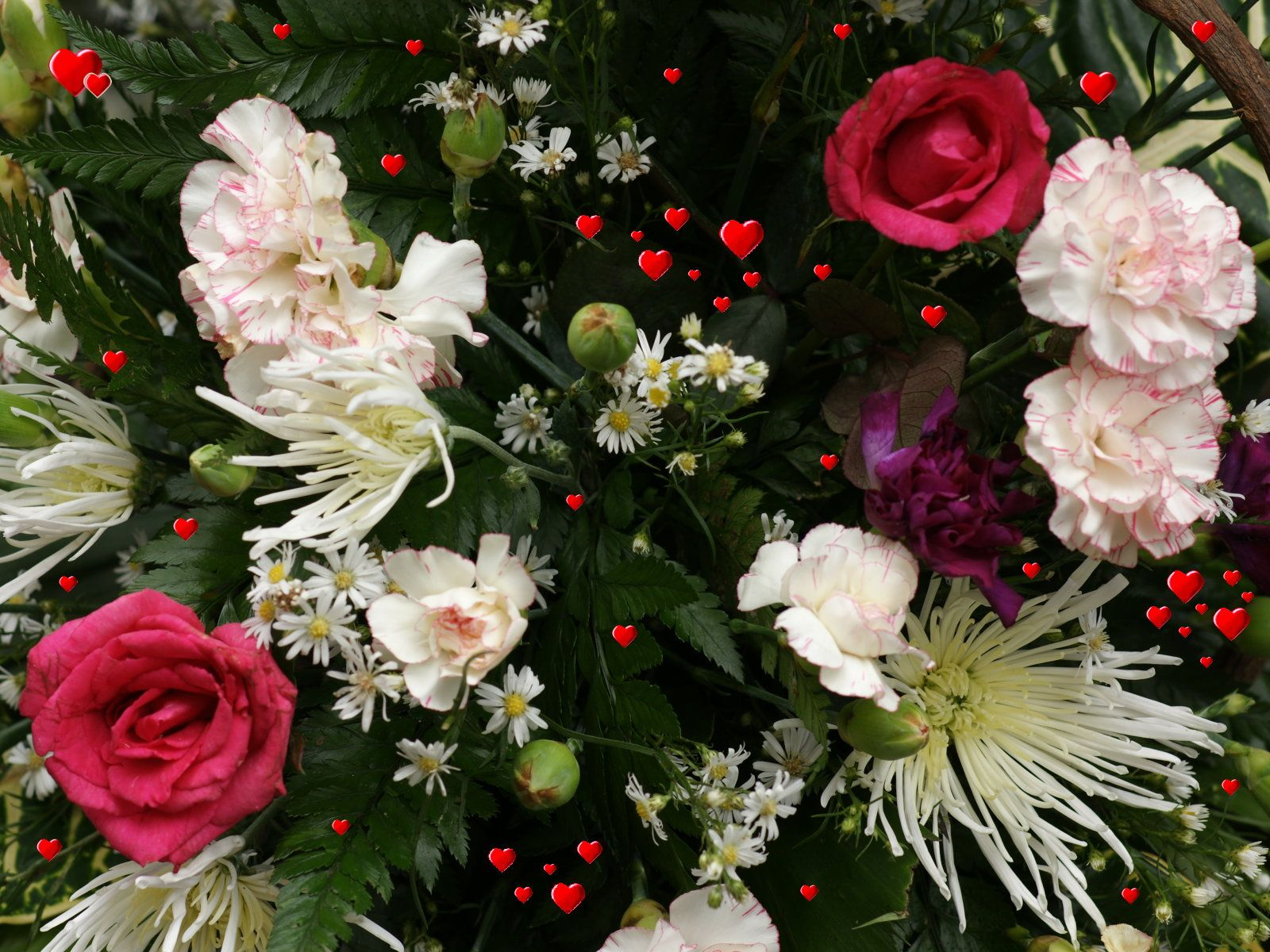 Tips to arrange a flower garden and how to do it beautiful flowers beautiful flowers in the world flowers typeofflower beautiful izmirmasajfo