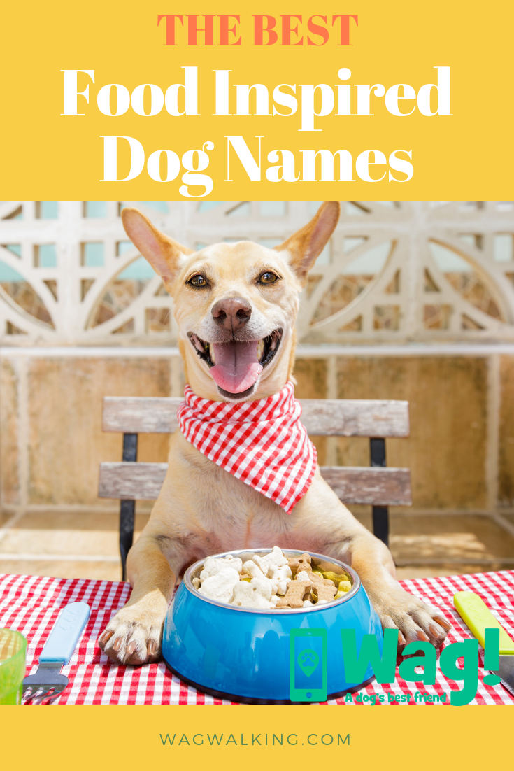 The Best Food Inspired Dog Names Topdognames Food Dogfood Dogtips Chihuahua Ladyandthetramp Garfield Becauseof Dog Names Best Dog Names Wag Dog Walking