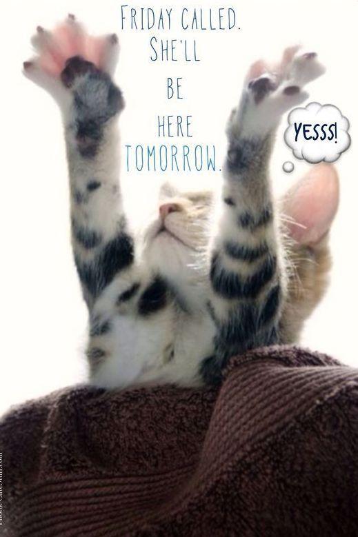 Thursday Motivation Meme : thursday, motivation, Funny, Thursday, Memes,, Images,, Pictures, Photos, Morning, Funny,, Quotes, Humor