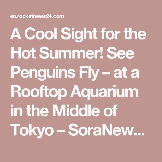 A Cool Sight for the Hot Summer! See Penguins Fly – at a Rooftop Aquarium in the Middle of Tokyo – SoraNews24
