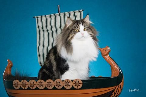 When Vikings Sailed So Did Their Cats...see more at PetsLady.com -The FUN site for Animal Lovers