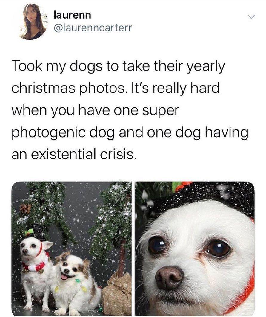 Happy Holiday Dog Memes In 2020 Dog Quotes Dog Holiday Dog Memes