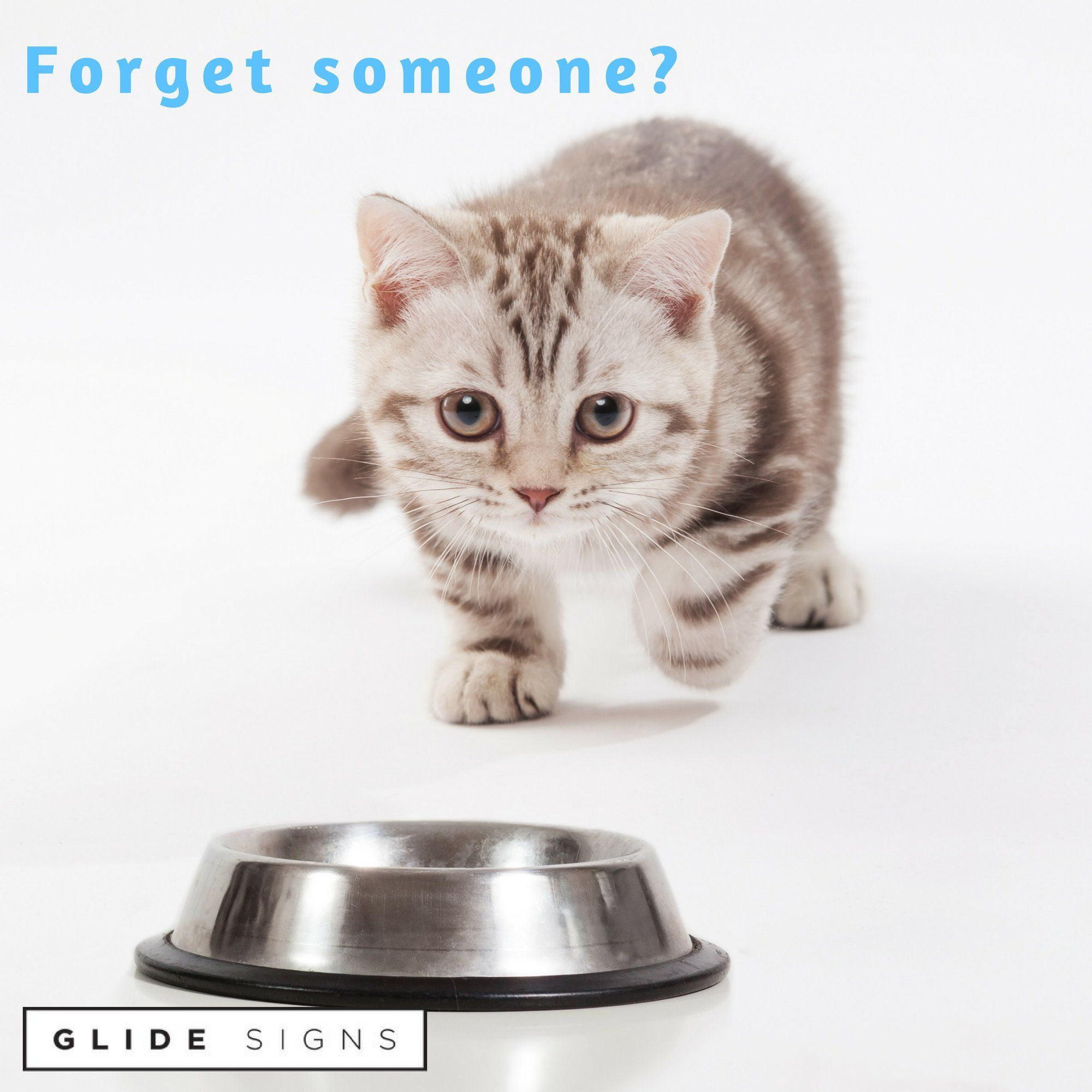 Glide Signs Cat Feeding Or Medication Reminder A Pet Food Organizer Am Pm Daily Indicator Sign Fed Or Feed The Kit Cat Feeding Kitten Supplies Food Animals