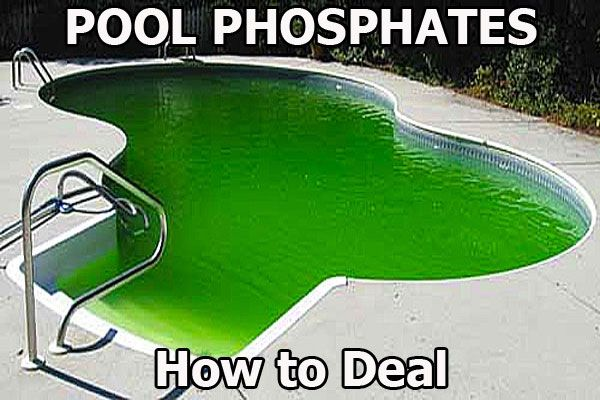 Pin On Algae In Pool How To Get Rid Of