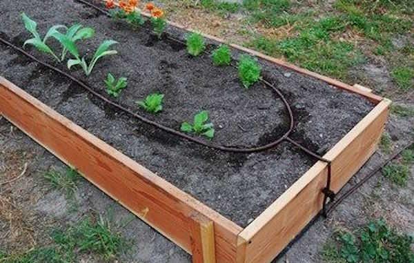les 5 secrets du jardinage sans effort. Black Bedroom Furniture Sets. Home Design Ideas