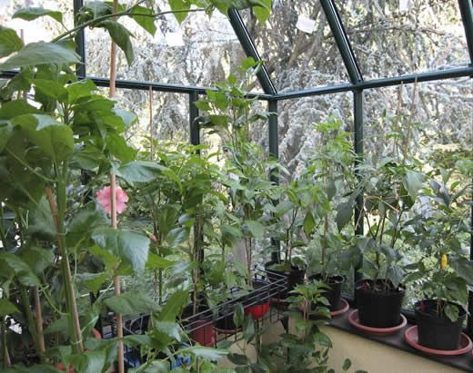 1000+ images about Greenhouse Plans on Pinterest | Greenhouses ...