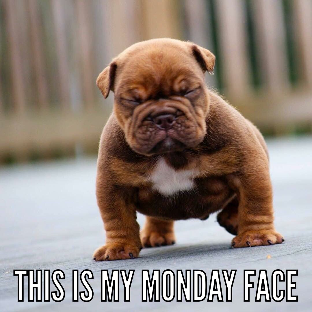 Visit Www Amazingdogtales Com For The Best Funny Dog Joke Pics